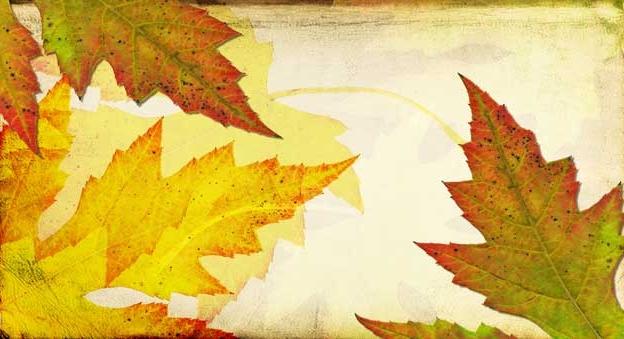Nouveautés de l'automne