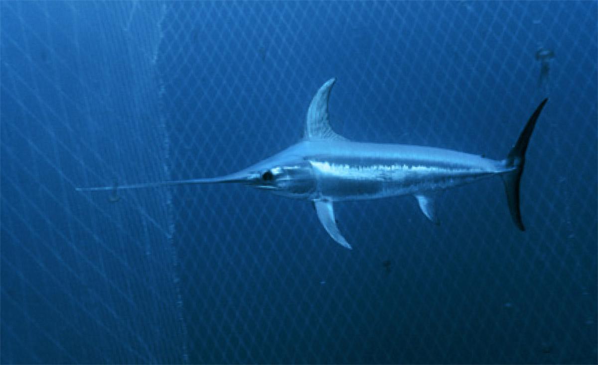 Animaux des oc ans m diath que de la cit de la mer - Grand poisson de mer ...
