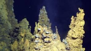 Sources hydrothermales photographiées sur le site Urashima dans l'océan Pacifique Nord à environ 3 000 mètres de profondeur. Image courtesy of Submarine Ring of Fire 2014 - Ironman, NSF/NOAA, Jason, © WHOI