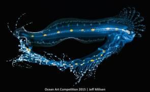 Un ophidiidae, ou donzelle, aux premiers stades de développement. Une photographie de Jeff Milisen, primée par l'Ocean Art Competition © Ocean Art Competition/Jeff Milisen