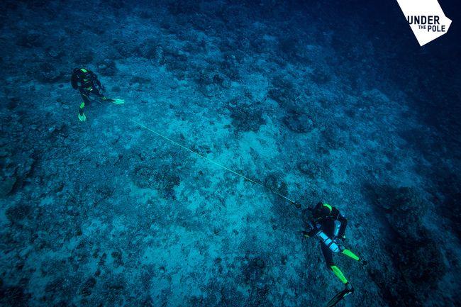 La capsule sera immergée dans cette zone située sur la pente externe du récif de Moorea (Polynésie française) © Franck Gazzola / Under The Pole / Zeppelin Network