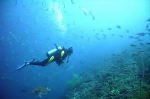 Apprends la plongée sous-marine