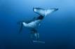 Baleine a bosse et baleineau © Roberto Rinaldi