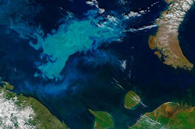 Efflorescence de coccolithophores dans la mer de Barents (Arctique)_Image satellite © NASA