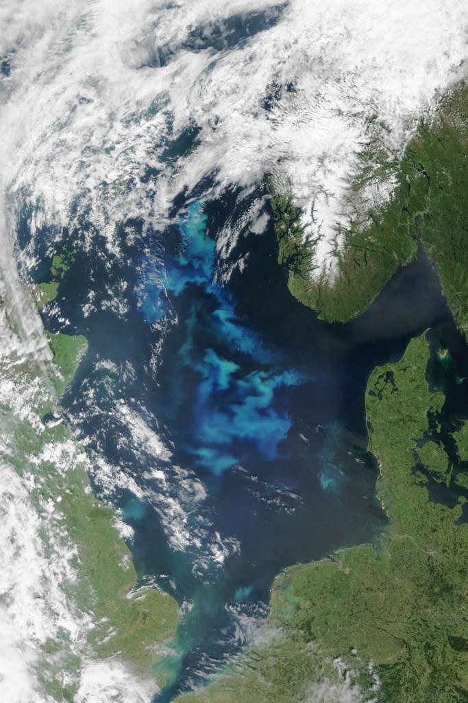 Bloom phytoplanctonique en mer du Nord ©NASA Earth Observatory - Jesse Allen