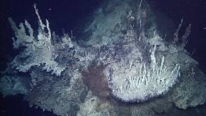Situées à 3 800 mètres de profondeur, ces sources sont les plus profondes jamais observées dans l'océan Pacifique © 2015 MBARI