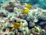 Récifs coralliens à Hawaii © Pixabay