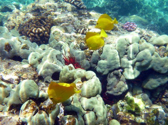 50% du couvert corallien des récifs a disparu depuis les années 1870© Pixabay