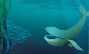 80 % de la pollution marine provient des activités humaines terrestres. Nos océans ont besoin de protection. © ONU