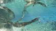 Reconstitution 3D du lézard marin