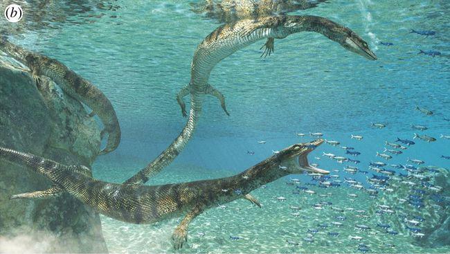 """Reconstitution 3D du lézard marin """"Primitivus manduriensis"""" en plongée dans un océan au temps des dinosaures © Fabio Manucci."""