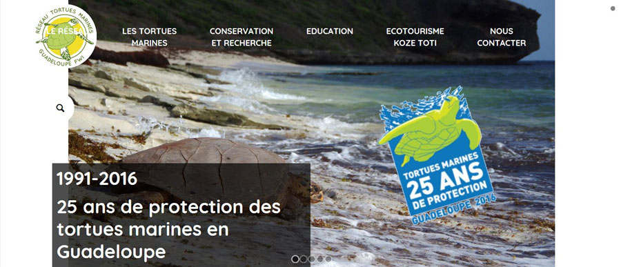 Réseau tortues marines-Guadeloupe