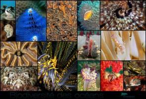 Ifremer - Fond d'écran - Biodiversité des océans © Ifremer