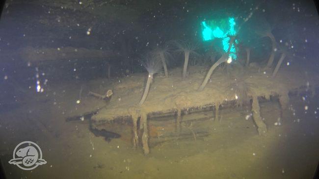 Un compartiment de rangement dans la cabine du capitaine Crozier, partiellement couvert de limon et d'anémones de mer. Une des fenêtres de la galerie de la poupe de la cabine est clairement visible en arrière-plan. © Parcs Canada, Équipe d'archéologie subaquatique