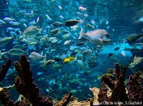 Coraux / Récifs de corail © La Cité de la Mer - Sylvain Guichard