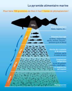 Le plancton constitue la base de l'alimentation de tous les organismes marins © Plancton du Monde – Géraldine Jublin