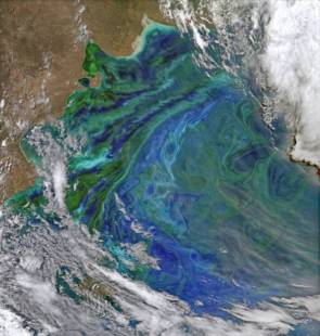 Image satellite d'une efflorescence algale © Norman Kuring, NASA's Ocean Color Group