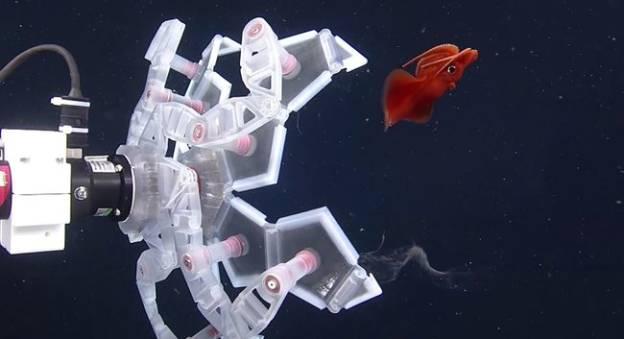 Le robot origami capture avec délicatesse les organismes mous et gélatineux comme les méduses, les calmars ou les pieuvres © Wyss Institute at Harvard University