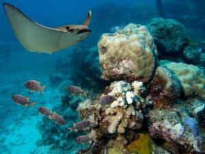 Récif corallien © Shutterstock