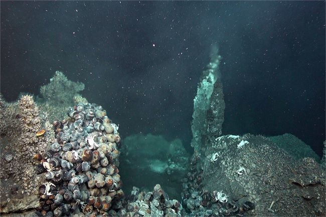 Au 1er plan, des d'escargots du genre Alviniconcha cohabitent autour d'un champ hydrothermal. © CHUBACARC 2019, Ifremer